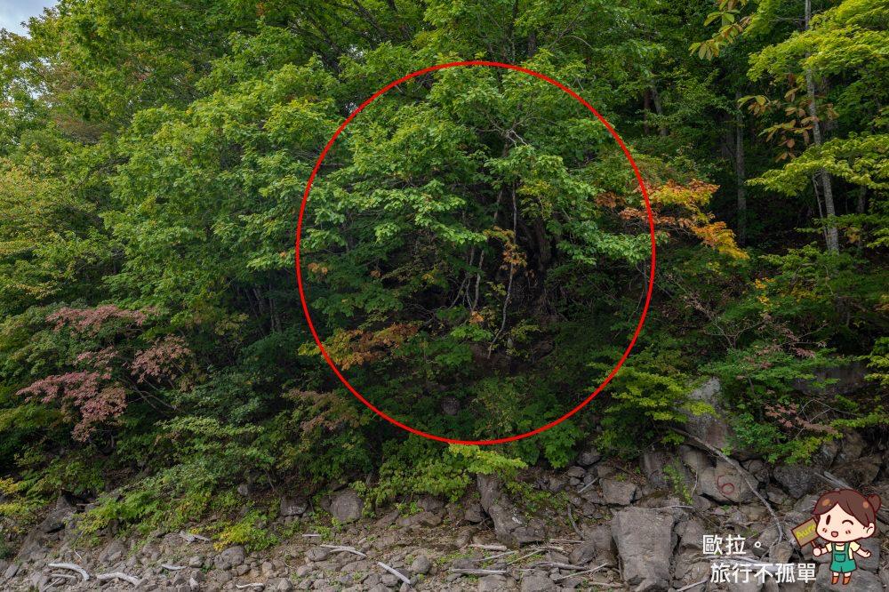 秋田最後秘境小又峽太平湖遊覽船熊冬眠洞